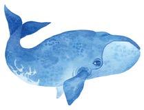 北极露脊鲸 向量例证