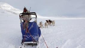 北极Manand狗雪撬队多壳的爱斯基摩白色雪道在北极 股票视频