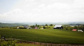 北海道农田 库存照片