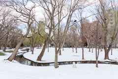 北海道大学的冬天风景 库存照片