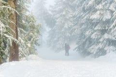 北温哥华区加拿大- 2017年12月30日:冬天路的两个人在常青杉树附近在森林晴天 图库摄影