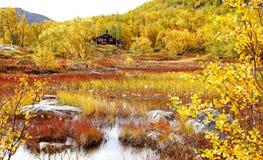 北的秋叶 库存照片