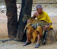 北碧,泰国- 2015年1月10日:在老虎寺庙的老虎 免版税库存图片