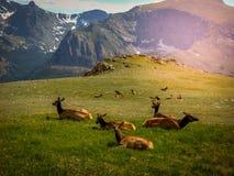 北科罗拉多Estes公园科罗拉多洛矶山国家公园 免版税库存图片