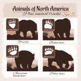 北美动物和动物轨道,脚印 皇族释放例证