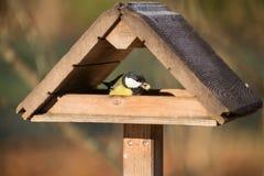 北美山雀在饲槽 库存照片