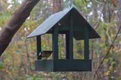 北美山雀坐垂悬在公园的一个喂食器 免版税库存图片