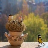 北美山雀,五子雀,玩具圣诞老人,饲槽,窗口基石 库存图片