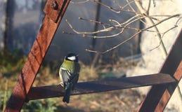 北美山雀,生锈的梯子 库存照片