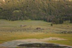 北美洲岩石北美野牛 库存图片