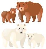 北美灰熊和北极熊 库存例证