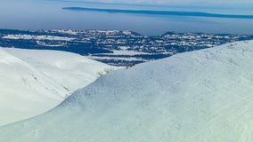 北美灰熊母猪通过雪带领她的崽 免版税图库摄影