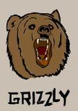 北美灰熊 向量例证