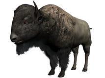 北美野牛例证 皇族释放例证