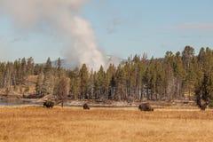 北美野牛和喷泉 库存照片