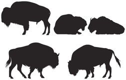 北美野牛或水牛 免版税库存照片