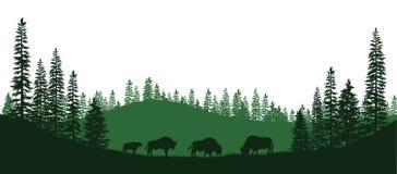 北美野牛黑剪影  森林动物自然全景  被隔绝的风景 野生生物场面 向量例证