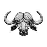 北美野牛,公牛,纹身花刺的,商标,象征,徽章设计水牛的水牛城佩带的