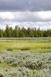 北美野牛黄石 库存图片