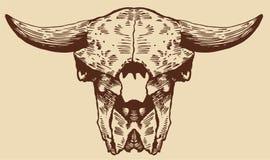 北美野牛头骨 库存图片