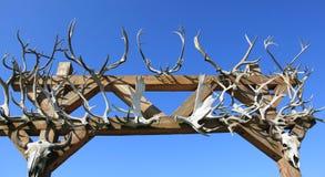 北美驯鹿鹿角 免版税库存照片