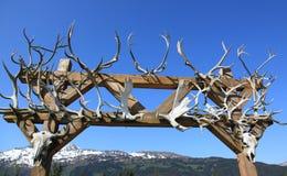 北美驯鹿鹿角 免版税库存图片