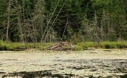 北美洲海狸小屋 免版税图库摄影