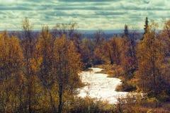 北自然好的看法在金黄秋天 库存图片