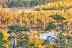 北自然好的看法在金黄秋天 免版税库存图片
