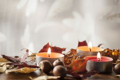 北赤栎和琥珀色的项链五颜六色的秋叶和橡子在木板 免版税库存照片