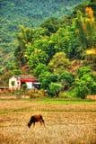 北越南的美好的风景 免版税图库摄影