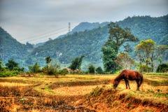 北越南的美好的风景 免版税库存照片