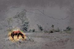 北越南的美好的风景 库存图片