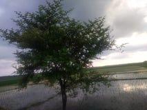 北部东部印度阿萨姆邦的树 库存图片