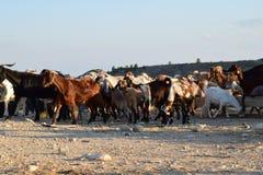 北部塞浦路斯农夫风景 库存图片