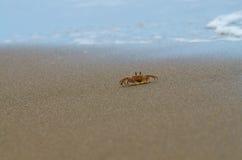 北部大西洋海滩卡罗来纳州螃蟹的鬼魂 免版税库存照片