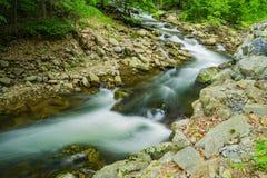 北部小河-狂放的山鳟鱼小河 库存图片