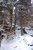 北部的森林 库存照片