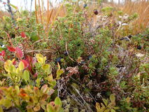 北部的植物 库存图片