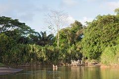 北部的Tortuguero河在哥斯达黎加东部 免版税库存照片