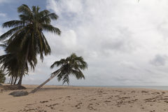北部coastile,北里约格朗德,巴西 库存照片