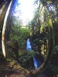 北雨林 图库摄影