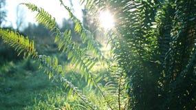 北雨林 库存图片
