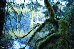 北雨林 库存照片