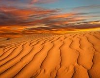 北非,含沙barkhans 库存照片