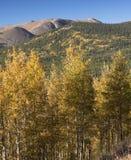 北风之山是13,082英尺在派克Natioanal森林 免版税库存图片