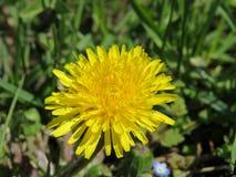 北高加索,唤醒的庭院自然在春天 库存照片