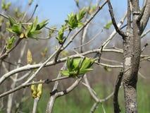 北高加索,唤醒的庭院自然在春天 库存图片