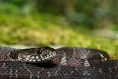 北水蛇 库存照片