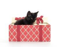 黑匣子礼品小猫 库存照片